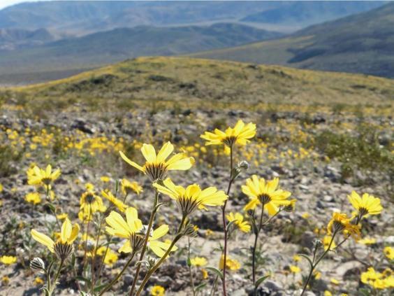 death-valley-national-park3.jpg