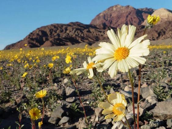 death-valley-national-park5.jpg