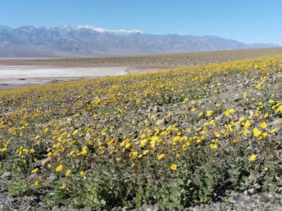death-valley-national-park6.jpg