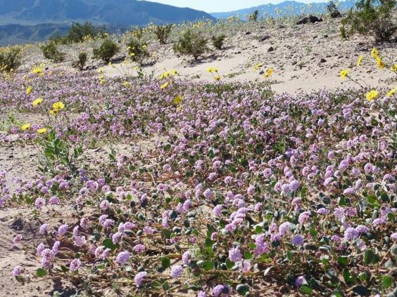 death-valley-national-park8.jpg