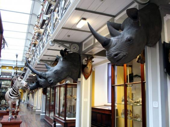 12-rhino-heads-pa.jpg