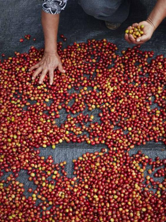 taylors-beans-gregson.jpg