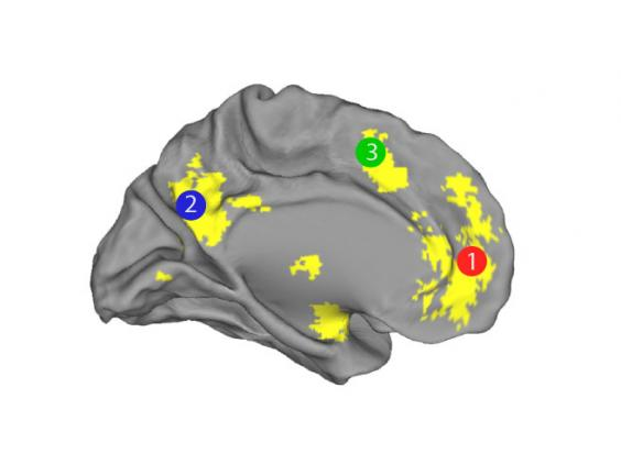 brainpic2.jpg