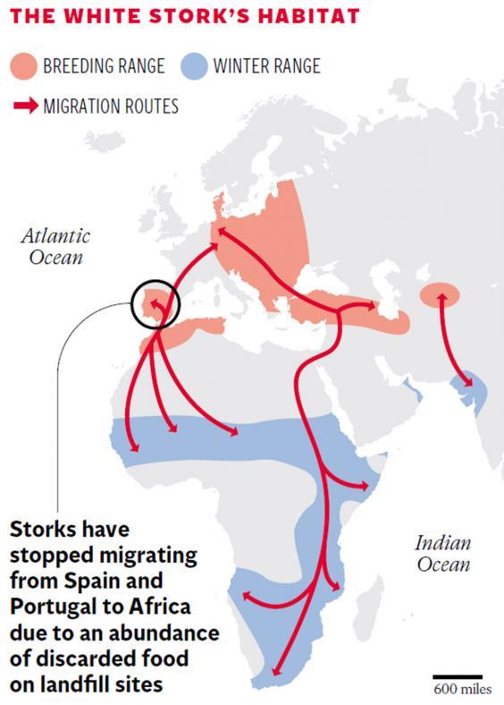 pg-12-storks-graphic.jpg