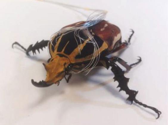 beetle12.jpg