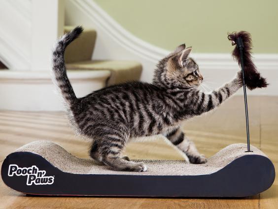 Jml Cat Chase Toy