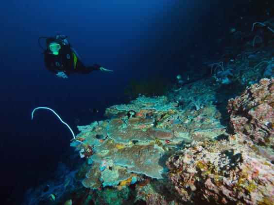 apo-reef-philippines.jpg
