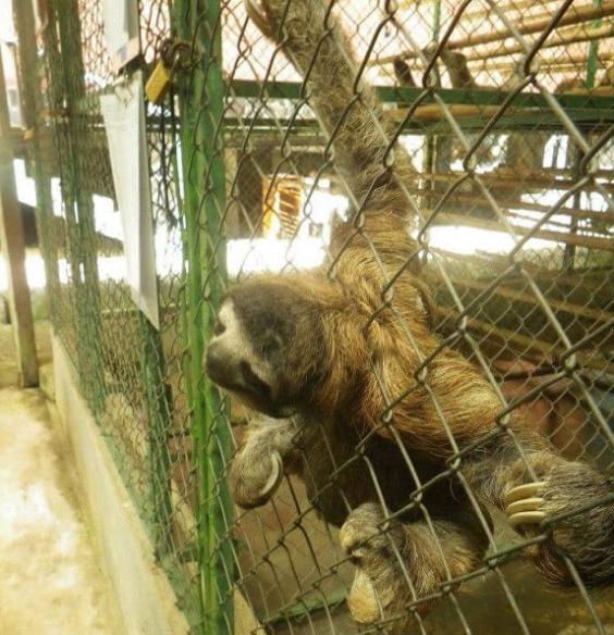 slothcage.jpg