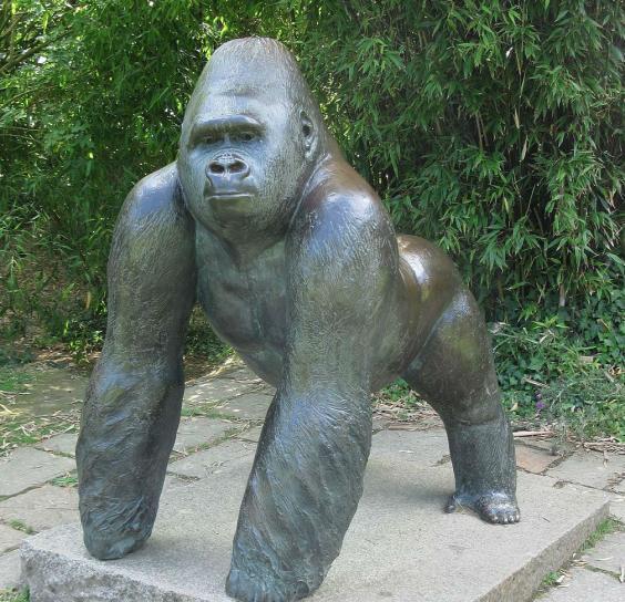 Cincinnati Zoo: Video Footage Of Gentle Giant Jambo