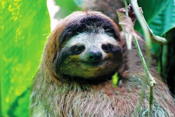 sloth-01.jpg