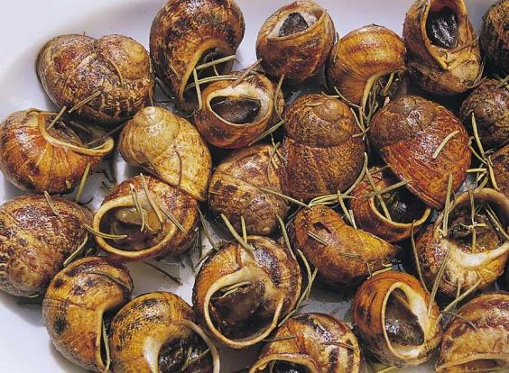 snails-with-rosemary-photo-.jpg