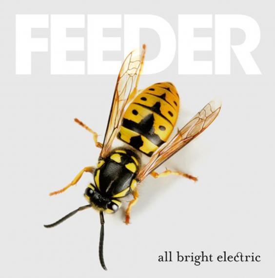 feeder-all-bright.jpg