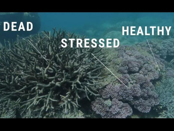 deadstressedhealthycoral.jpg