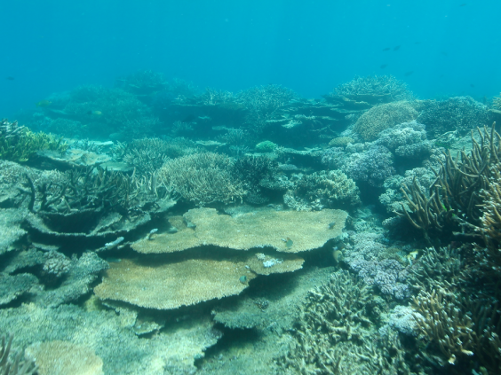 Great Barrier Reef climate severely affected by rising water temperatures