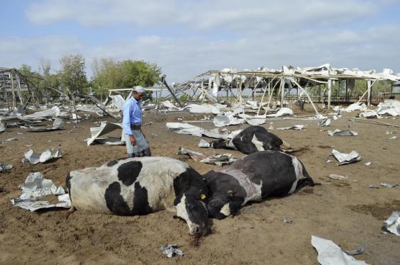 dead-cows-yemen.jpg