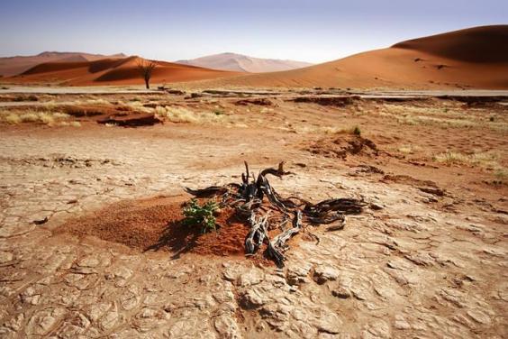 namibia-mar07.jpg