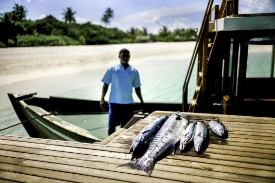 maldives5-fish-for-the-guests.jpg