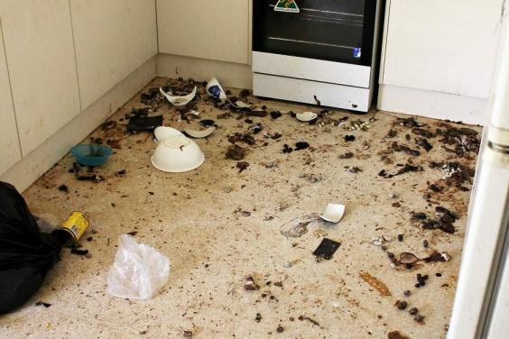 australia-cat-rescue-rspca-2.jpg