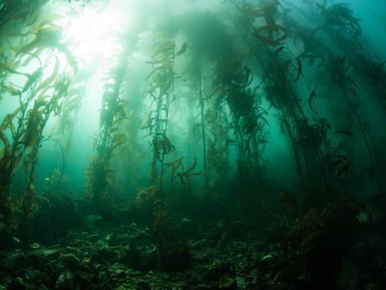kelp-forrest.jpg