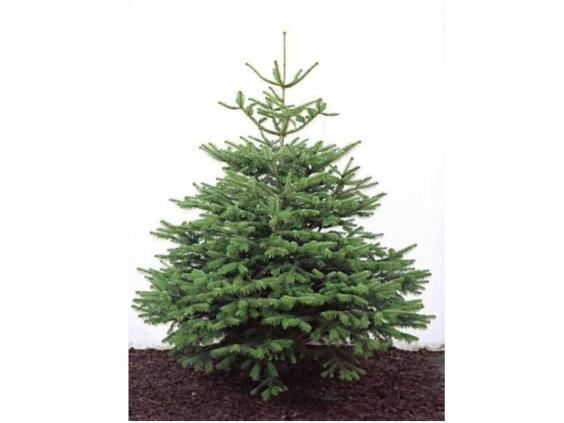 14 Best Real Christmas Trees
