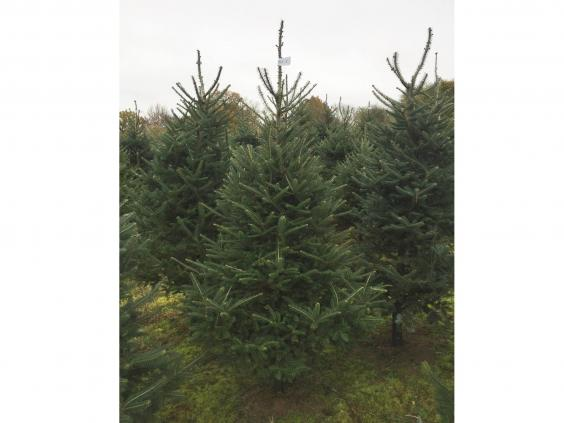 sendmeachristmastree-sussex.jpg