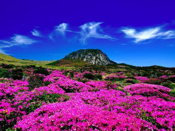 south-korea-jeju-island.jpg