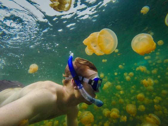 jellyfish-lake.jpg