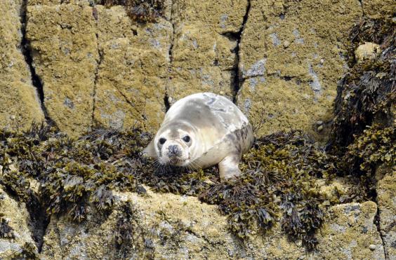 isle-of-may-seal-c-greg-macvean.jpg