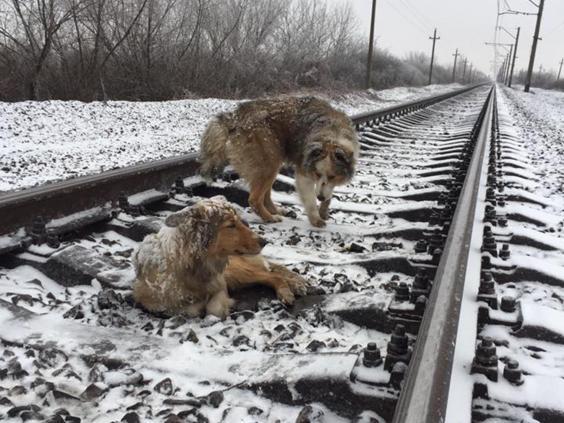 dogs-tracks.jpg