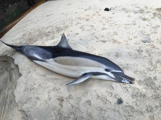 dolphin-beach.jpg