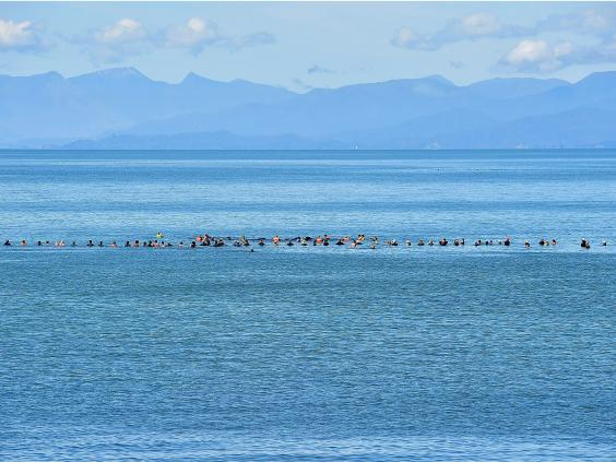 Hundreds of Whales Stranded In New Zealand Beach