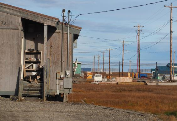 the-inupiat-eskimo-village-of-kaktovik-is-struggling-to-manage-an-increase-of-polar-bears-coming-into-town-c-sarah-reid.jpg