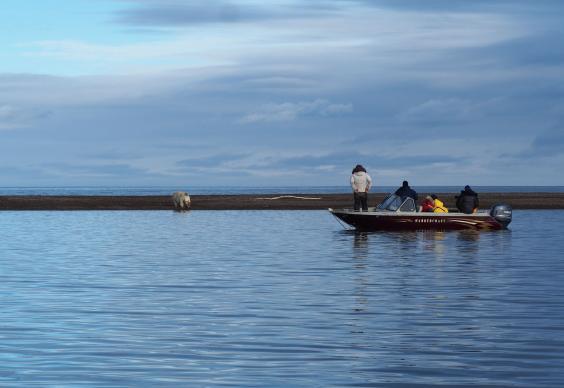 tourist-boats-in-kaktovik-maintain-a-safe-distance-from-polar-bears-c-sarah-reid.jpg