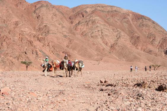 cameleers-overtake-hikers-en-route-to-the-evenings-camp.jpg
