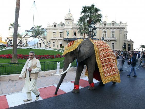 mandarin-elephant.jpg