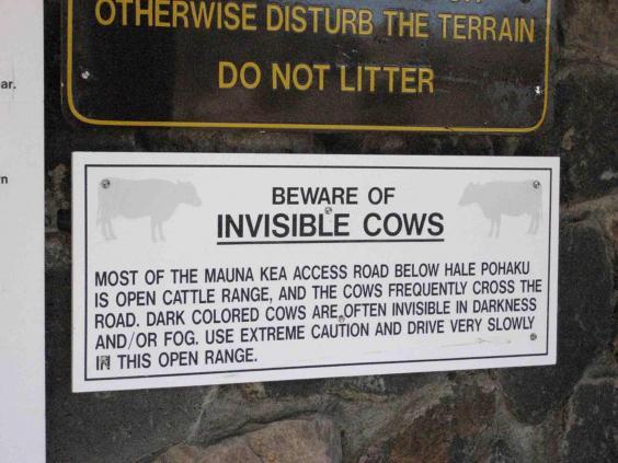 beware-cows.jpg