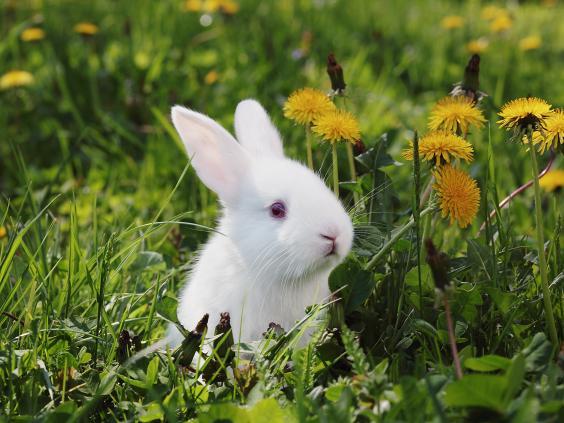 cute-rabbit.jpg