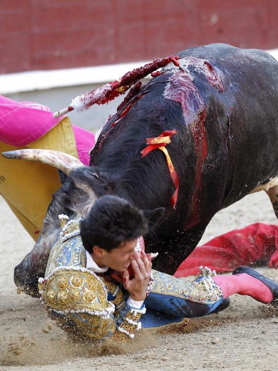 bull-gore-0.jpg