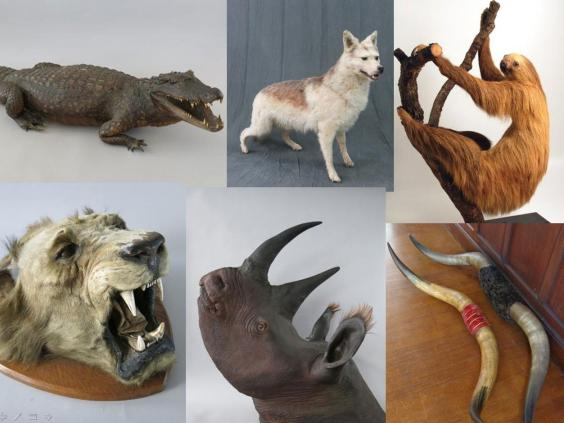 w49-16-taxidermy-burglary-collage-2-jpg.jpg