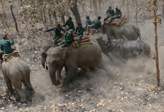 Rhino Nepal 1.jpg