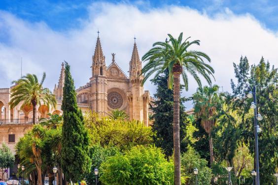 palma-cathedral-palm-trees.jpg