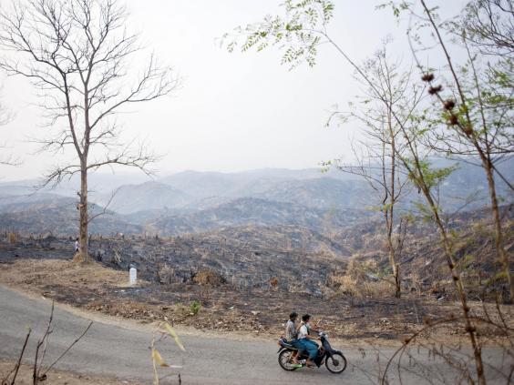 myanmar-teak-getty.jpg