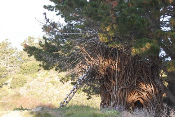 treebones.jpg