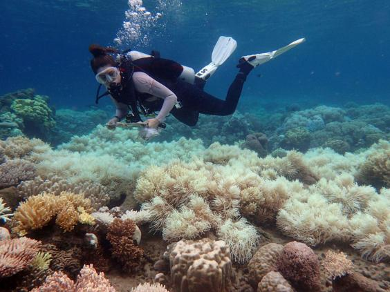 great-barrier-reef-bleaching.jpg