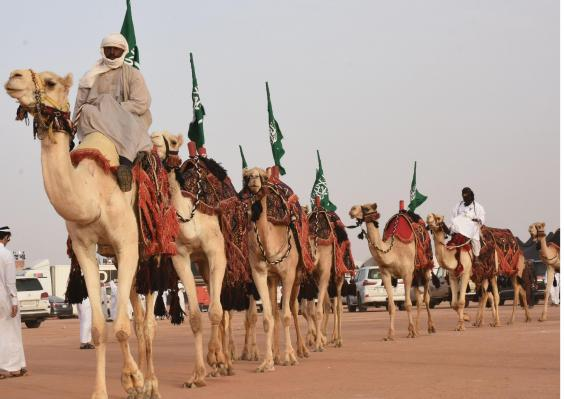 ksa-camels.jpg