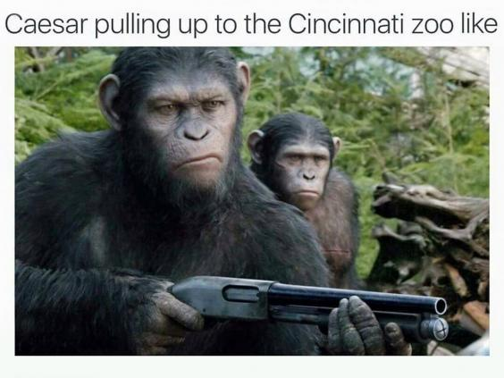 Funny Zoo Memes : Harambe one year on: how the gorilla became an internet meme the