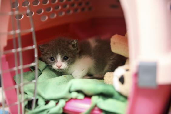 losangeles-kittens-07225b.jpg