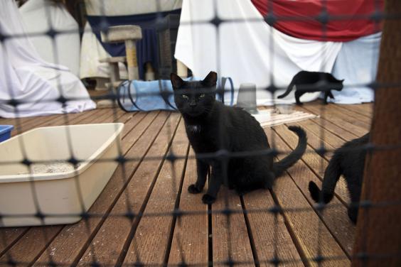 losangeles-kittens-08.jpg