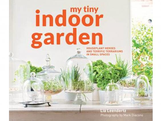 my-tiny-indoor-garden.jpg