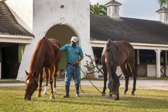 stables-3.jpg